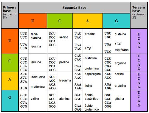 deciphering of genetic code pdf