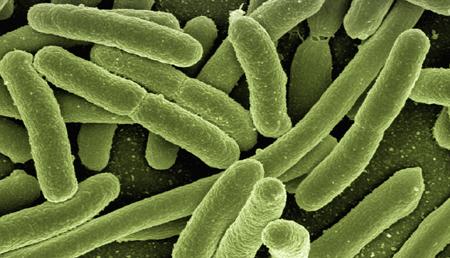 Crean bacterias programadas capaces de inducir regresión tumoral e inmunidad antitumoral sistémica