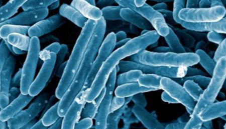 Un compuesto natural disminuye la capacidad infectiva de las bacterias