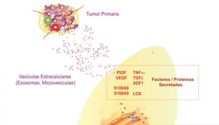Microambiente, exosomas tumorales y procesos de metástasis