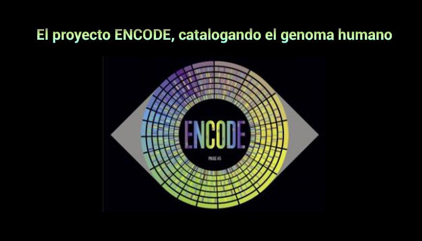 El proyecto ENCODE, catalogando el genoma humano