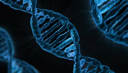Científicos identifican un nuevo nivel de información en la secuencia del ADN