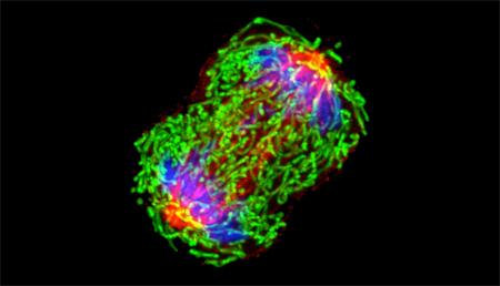 Desarrollan un tatuaje biomédico celular que podría detectar la hipercalcemia asociada con algunas patologías