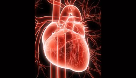 Localizan un interruptor genético en el corazón