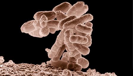 Trasplantes de microbiota fecal en personas con VIH