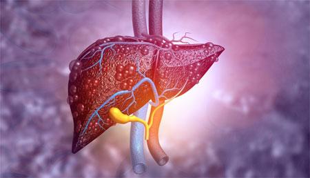 Hígados humanos en miniatura, nueva herramienta para el estudio de las enfermedades hepáticas