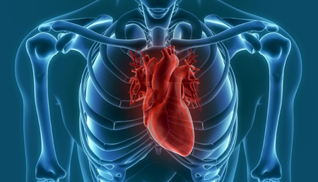 La inhibición de la proteasa OMA1 podría proteger contra la insuficiencia cardiaca