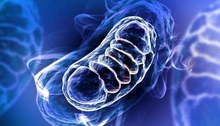 La falta de Opa1 podría generar inflamación severa