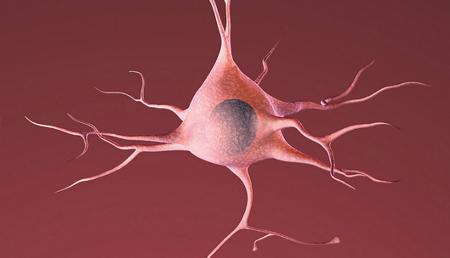 Diseñan un modelo celular para estudiar la relación entre enfermedades neurodegenerativas