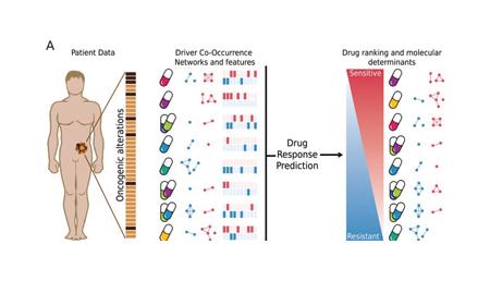 Un nuevo sistema ayuda a predecir el tratamiento oncológico más eficaz